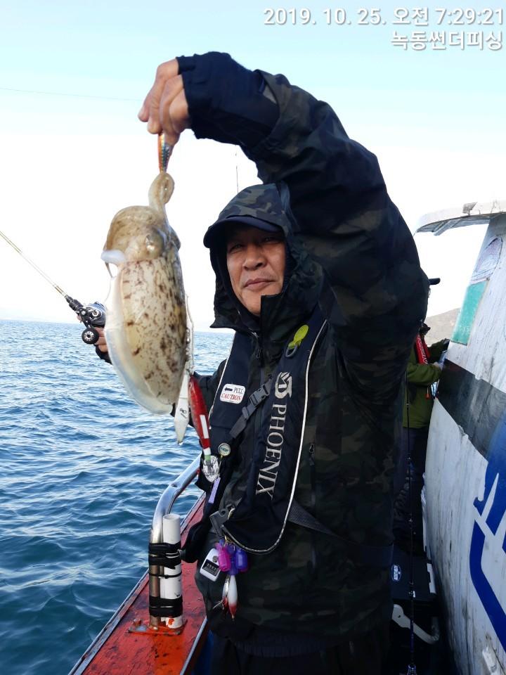갑오징어 고흥 조황입니다 25일